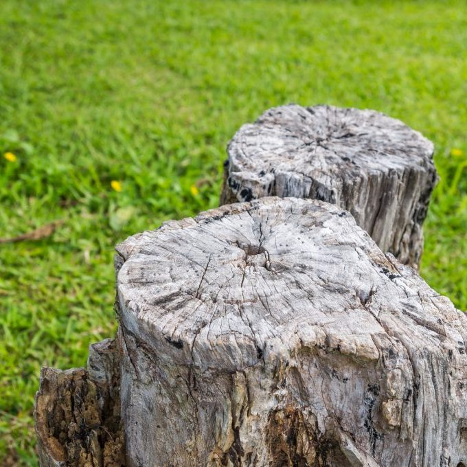 tree stump in the grass