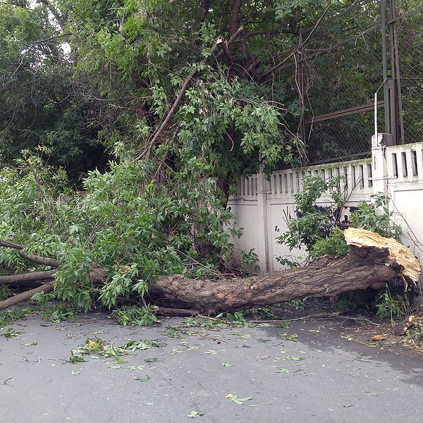 tree fell down in the road