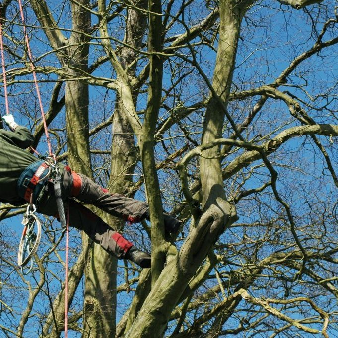 man in the tree with ropes